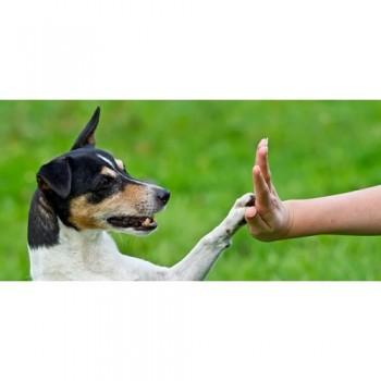 M.R, éducateur canin à Cahors