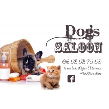 Salon de toilettage DOG'S SALOON à Cahors, toilettage chien et chat à Cahors