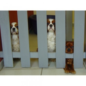 Toilettage BOULE DE POILS à Cahors, salon de toilettage pour animaux à Cahors
