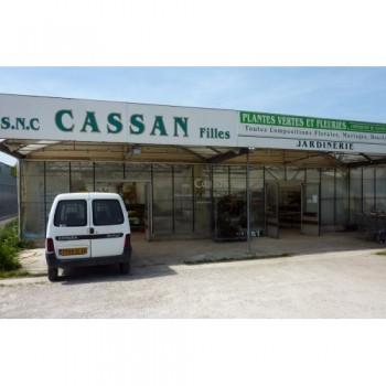 Fleuriste CASSAN Cahors, fleuriste à Cahors, fleurs et bouquets en tout genre.